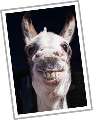 stock donkey pictures